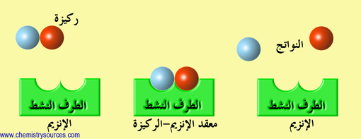 إنزيمات enzymes