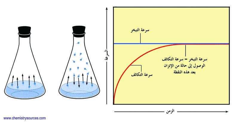 equilibrium vapour pressure