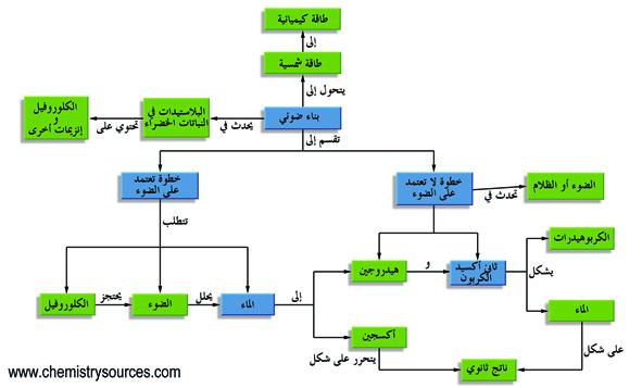 البناء الضوئي (التمثيل الضوئي)  photosynthesis