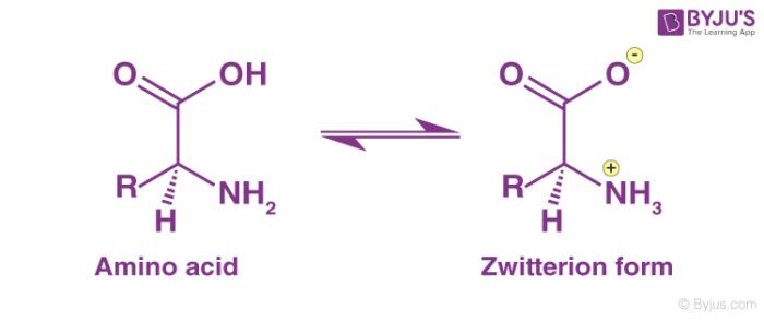 الزويتريون Zwitterion أو الجزئ المتعادل أو الأيون المزدوج (أيون زويتر)